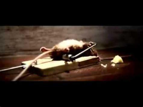 nolans cheddar mouse commercial nolan s cheddar cheese commercial doovi
