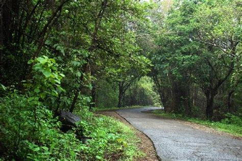 Ghost Of Atlantic Jungle Resort sgnp forest road 1 picture of sanjay gandhi national