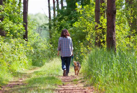 how to keep ticks dogs how to keep ticks away for best tick repellent options pest hacks