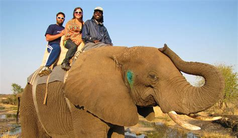 syari eleghant selebrity what to expect on an elephant back safari africa geographic