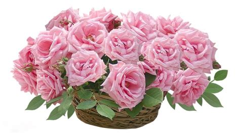 google pink roses pink roses google search beautiful flowers pinterest