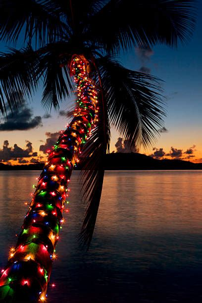 palm tree christmas light net royalty free palm tree lights pictures images and stock photos istock