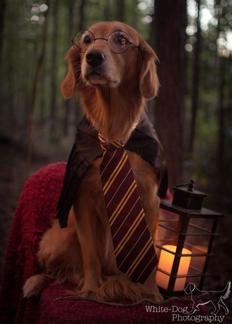harry s dogs best harry potter costume ideas on harry beds and costumes