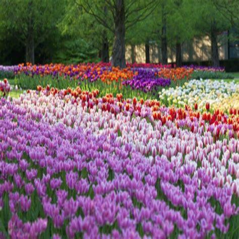 imagenes raras de rosas as flores mais raras do mundo fotos mundodastribos