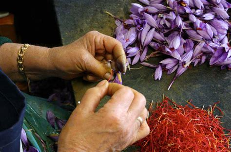 when does your tree come growing gardens project where does saffron come from