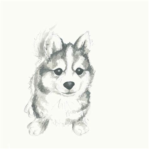 puppies drawings meaney illustration puppy drawings