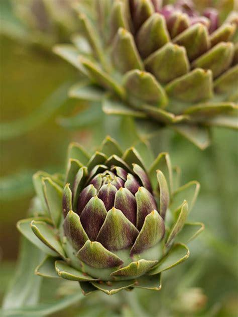 edible plants bhgcom  homes  gardens