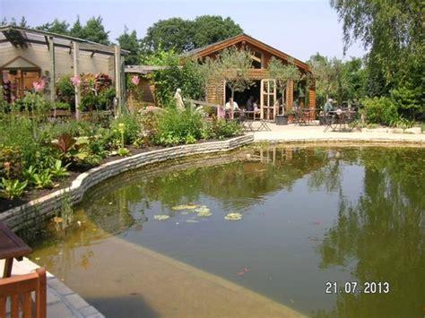 cream tea holmes gardens wareham dorset picture