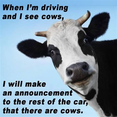 funny quotes  life   mootor running cows rosaforlife quotes daily leading