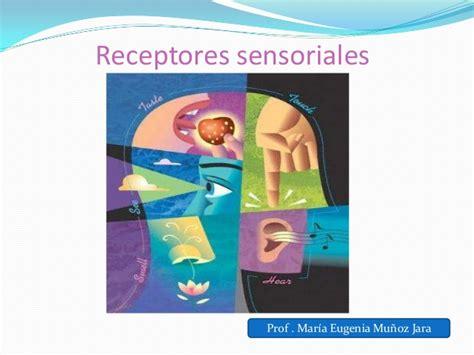 los receptores sensoriales receptores sensoriales prof maria eugenia