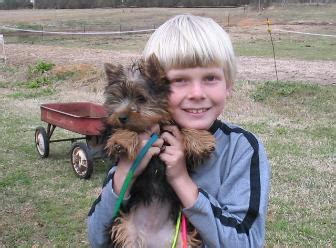 teacup yorkie puppies for sale in macon ga faq page teacup yorkie puppies for sale terrier