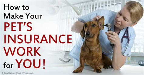 health insurance for dogs pet health insurance important things you should