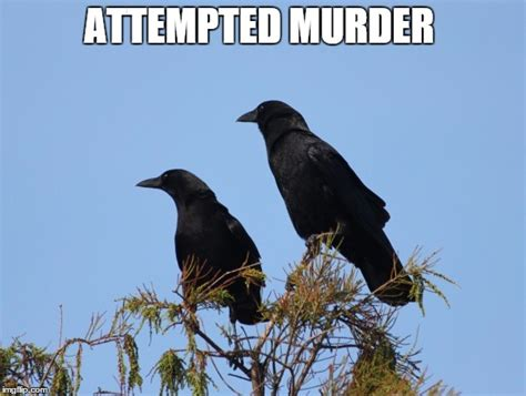 Attempted Murder Meme - image tagged in 2 crows imgflip