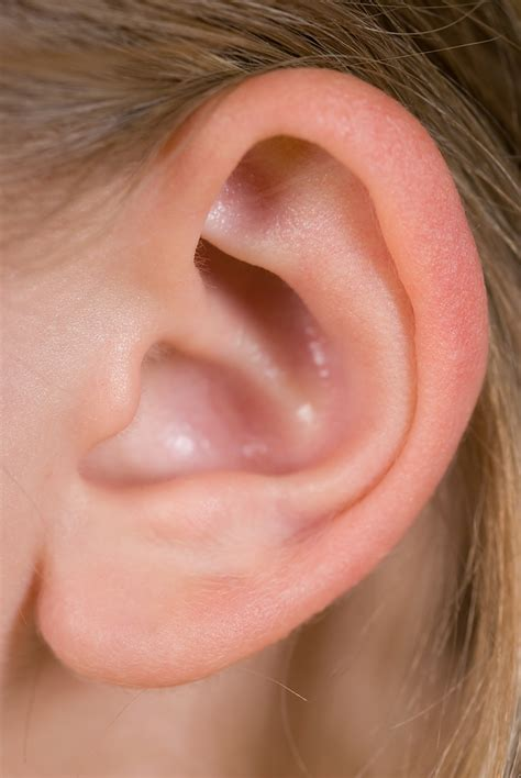 top ten dos and don ts of ear remedies doctor steven y