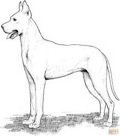 Great Dane Coloring Page Free Printable Coloring Pages Great Dane Coloring Pages