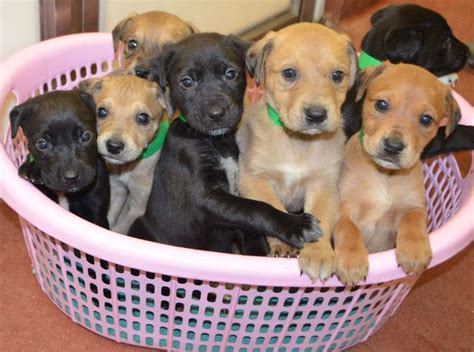 litter of puppies adorable litter of puppies found abandoned is quot present quot real