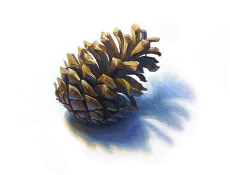 simple pine cone drawing www imgkid the image kid