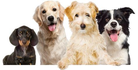 bark avenue puppies bark avenue dayc homepage