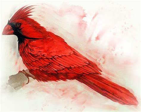 watercolor cardinal tattoo powerful cardinal bird design ideas and their meanings
