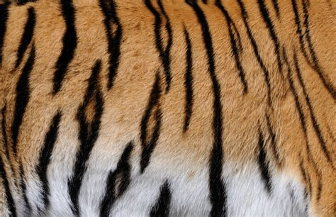animal pattern photography pattern in animals www imgkid com the image kid has it