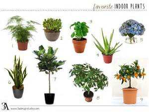 favorite indoor plants 3a design studio