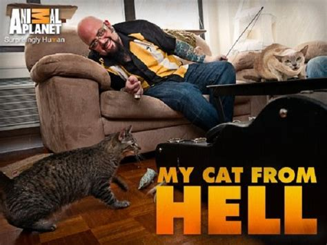 fat cat tattoo jackson ca tv weekly now in the new season of quot my cat from hell