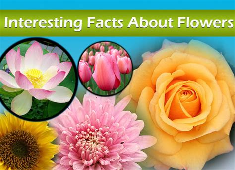 facts about flowers interesting facts about flowers did you science