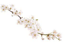 fiori di bach ansia e depressione fiori di bach rimedi per ansia depressione attacchi di