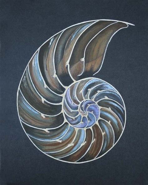 ammonite tattoo best 20 nautilus ideas on