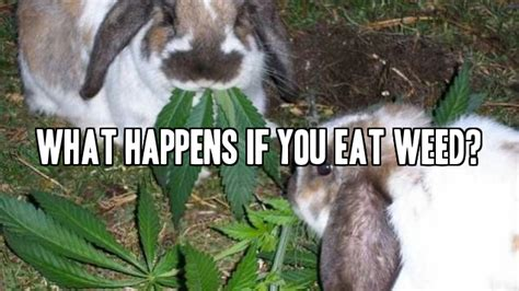 what happens if a eats what happens if you eat