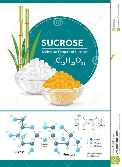 sucrose structural formula cartoon vector cartoondealer