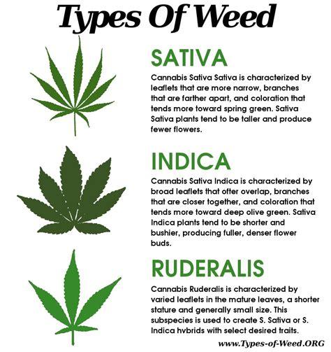 potted biography definition todo lo que necesitas saber acerca de las hojas de cannabis