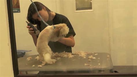 petsmart grooming grooming at petsmart
