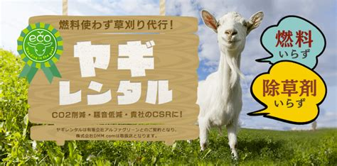 get your goat rentals goat renting in japan weirld news