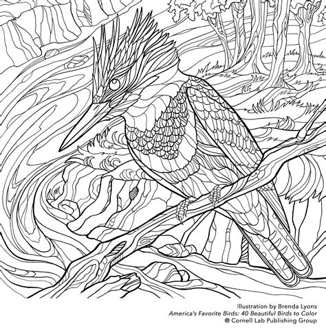 coloring pages kingfisher download your free belted kingfisher coloring page