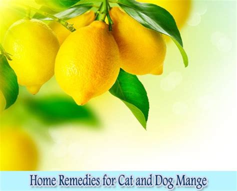 home remedies for cat and mange