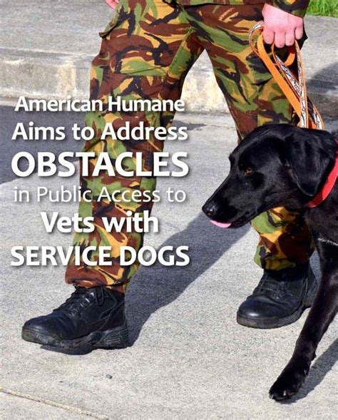 veteran dogs vets and service dogs fido friendly