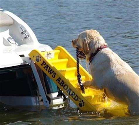 boat names dog lovers paws aboard dog boat ladder ladder boats and your dog