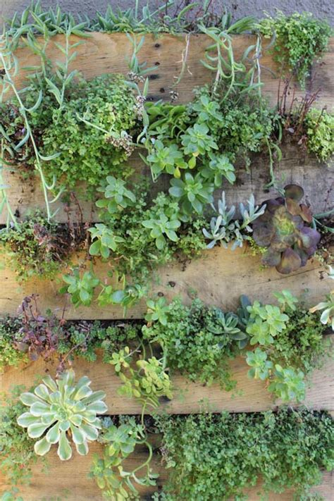 Recycled Vertical Garden How To Create A Vertical Garden From Recycled Pallets