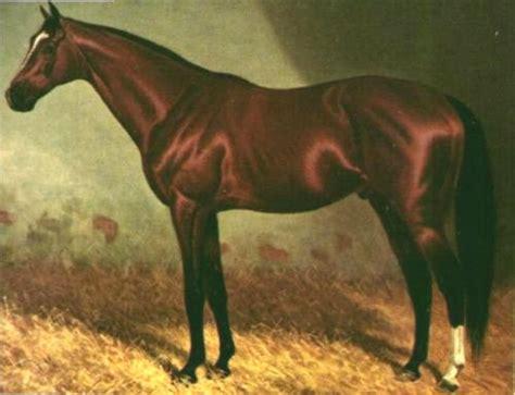 thoroughbred horses  art  equinest