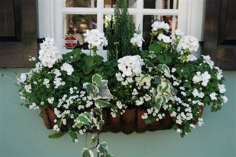 window boxes flowers windows boxes container window - White Window Flower Boxes