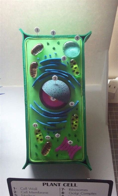 3d plant cell diagram project 1000 images about school projects on plant