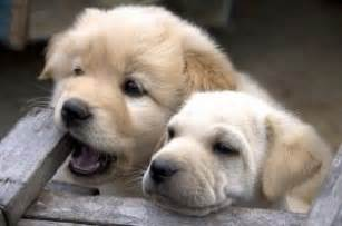 cute puppies photo free download