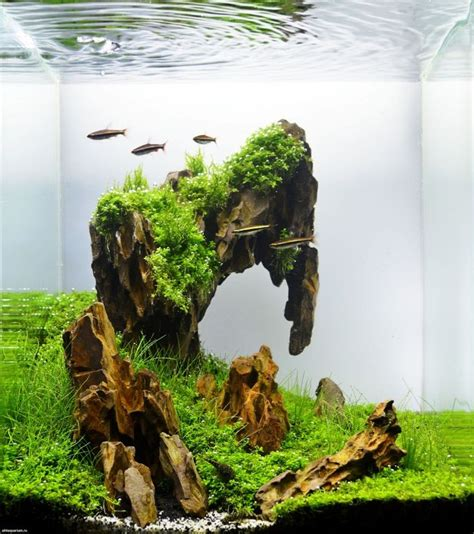 aquascapes online image gallery nano aquascape