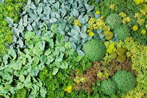 giardini artificiali giardini verticali artificiali con le piante false sulle