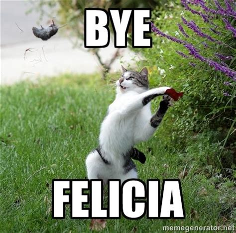 Goodbye Cat Meme - 152 best images about bye felicia on pinterest 2014