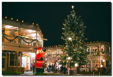 old town plaza christmas tree albuquerque daily photo