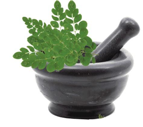 Kapsul E250 Konimex Nutrisi Kulit Dan Kesuburan Kandungan 1 100 senyawa aktif kelor herbal organik nutrisi