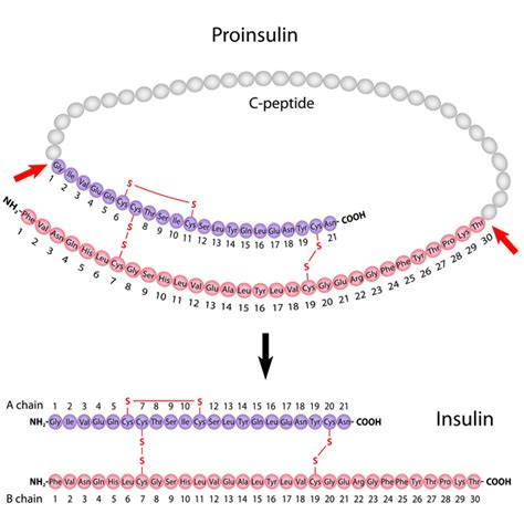 c protein insulin wolfram genetics home reference