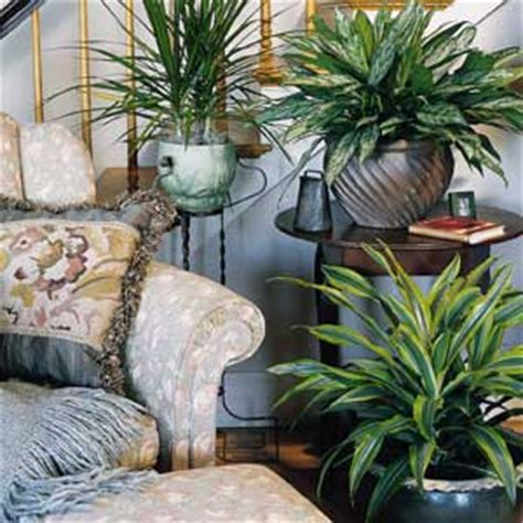 Home Plant Decor by A List Of Tropical Houseplants For Indoor Shade Interior